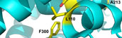 Key residues controlling binding of diverse ligands to human cytochrome P450 2A Enzymes
