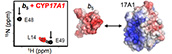 Substrate-modulated cytochrome P450 17A1 and cytochrome b5 interactions revealed by NMR