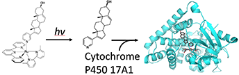 Illuminating Cytochrome P450 Binding: Ru (II)-Caged Inhibitors of CYP17A1